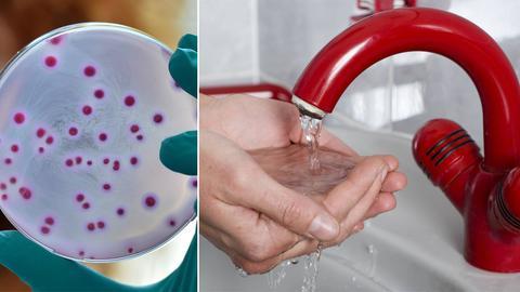 E-Coli-Bakterien verunreinigen Trinkwasser
