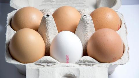 Sechs Eier im Karton - das vordere in der Mitte ist weiß