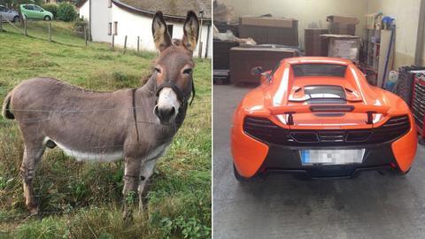 Esel Vitus und der karottenfarbene McLaren-Sportwagen.