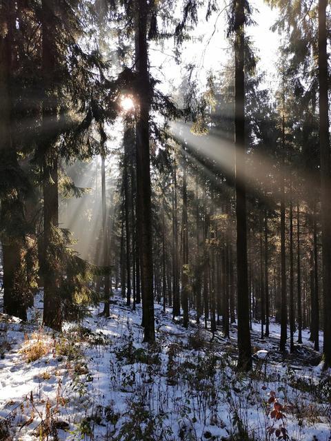 Sonne scheint durch Bäume, Boden mit Schnee bedeckt