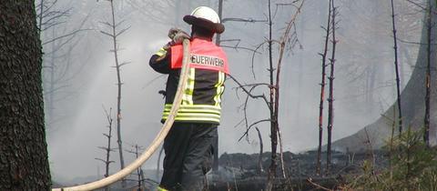 Feuerwehrleute löschen Waldbrand