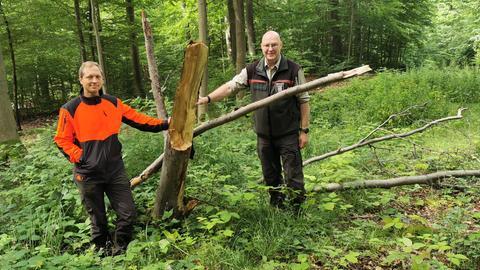 Hessenforst warnt vor Gefahren im Wald durch Astbruch