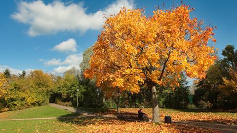 Herbstliche Impressionen in einem Park in Hofheim am Taunus