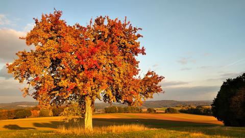 Laubbaum in Herbstfarben