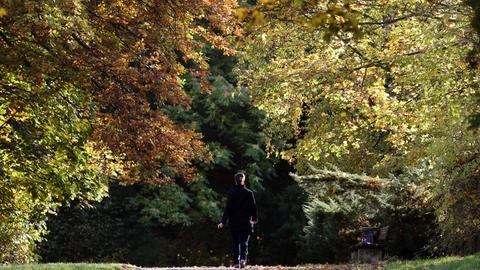 Mann zwischen Bäumen