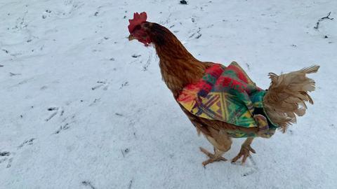 Huhn mit Pullover