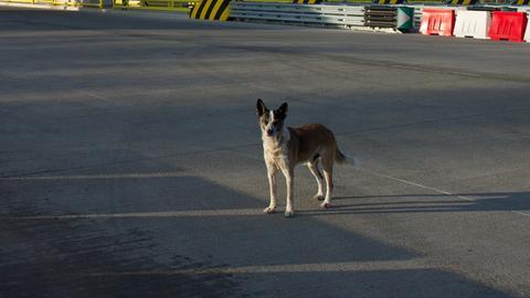 Hund auf Autobahn