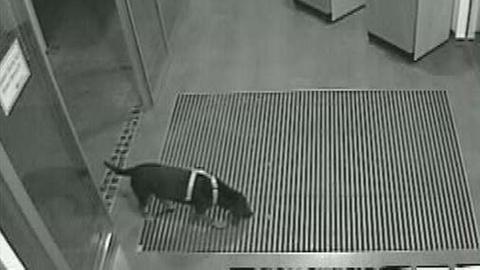 Dackel mit Leine im Vorraum einer Bank
