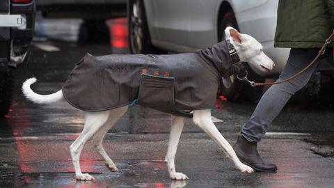 Hund Decke Regen