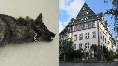 Der tote Hund / Amtsgericht Wetzlar