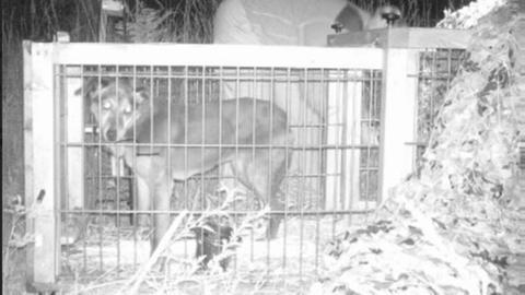 Gefangener Hund im Käfig