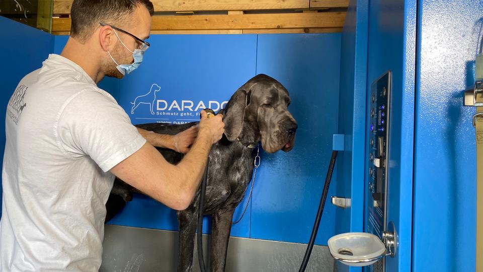Eine-saubere-Sache-Frankfurts-erste-Waschstra-e-f-r-Hunde