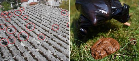 Hundekacke auf Dach