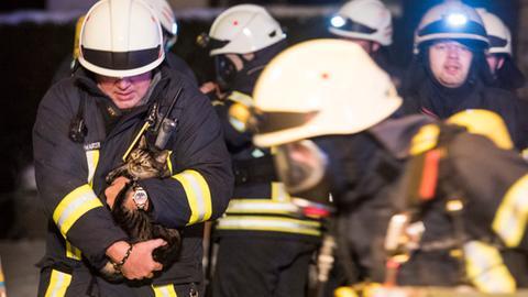 Feuerwehrmänner retten eine Katze aus der brennenden Wohnung.