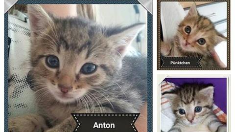Bilder der verätzten Katzenbabys
