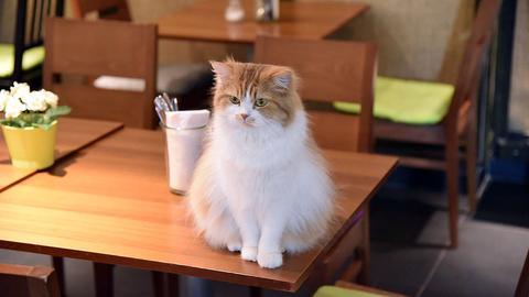 Katze auf dem Tisch