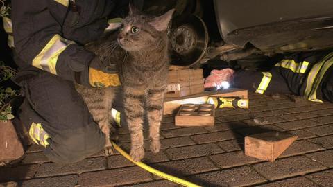 Feuerwehr befreit Katze