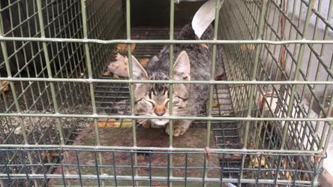 Eines der aus dem Motorraum in Rüsselsheim geretteten Kätzchen.