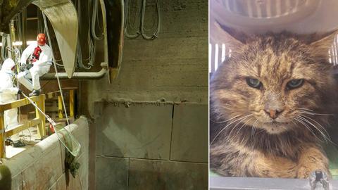 Katzenrettung Müllverbrennungsanlage
