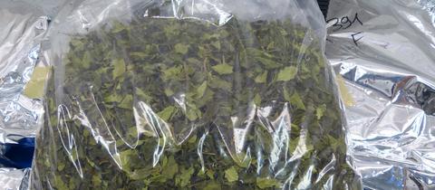 Die Kaudroge Khat war als grüner Tee deklariert.