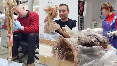 Drei Fotos zeigen Menschen, die anatomische Objekte für die Ausstellung Körperwelten präparieren.