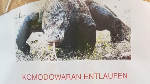 """Prädikat """"ausgedacht"""": Diese Warnung vor einem entlaufenen Komodowaran ist Quatsch."""