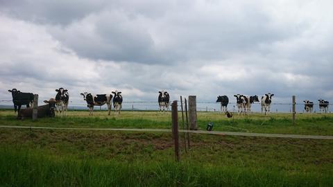 Kühe Wolken Willingshausen