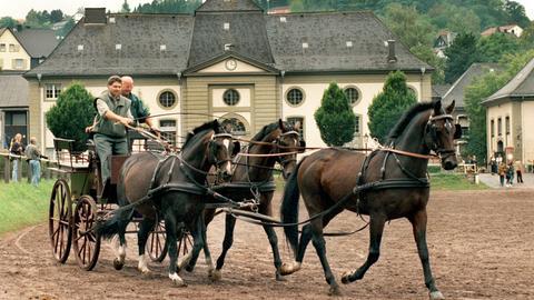 Pferdewagen auf dem Landgestüt Dillenburg