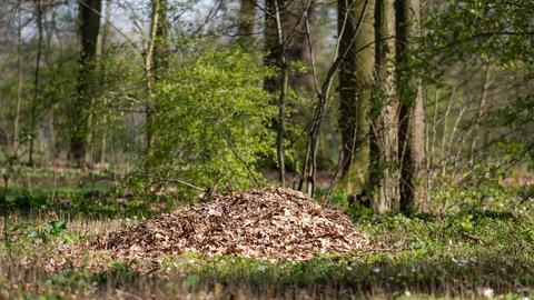 Laub liegt in einem Waldstück zwischen den Bäumen.
