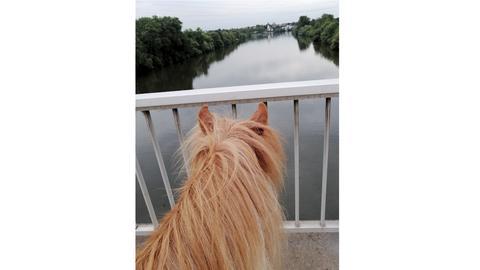 """Pony """"Löwenherz"""""""