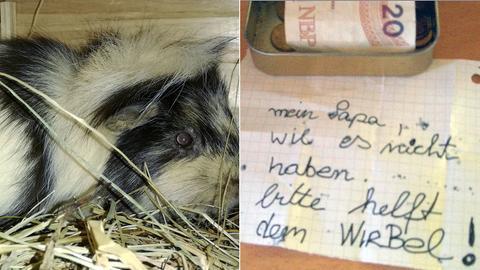 "Meerschweinchen ""Wirbel"""