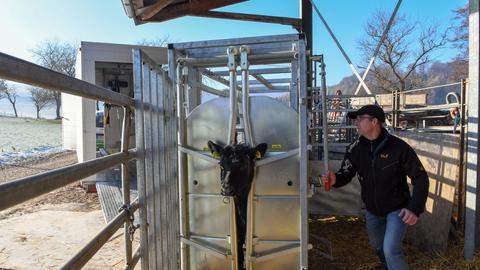 Ein in Hessen entwickelter mobiler Schlachthof für mehr Tierwohl