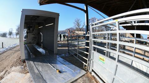 Eine mobile Schlachtanlage für eine tierschutzgerechtere Tötung der Tiere