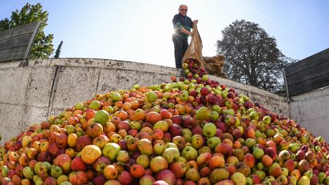 Apfelzeit in Hessen - Äpfel von Streuobstwiesen werden im Silo der Apfelannahme einer Kelterei in Karben abgeliefert. Haben Sie auch ein außergewöhnliches Bild aus Hessen? Dann schicken Sie uns Ihr Foto an foto@hessenschau.de.