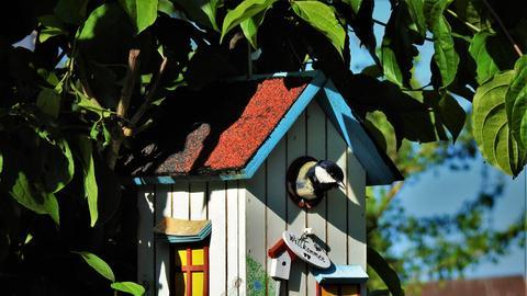 Eine Meise in einem Vogelhaus in einem Garten in Gründau-Rothenbergen