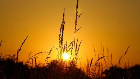 Durch die Gräser am Wegesrand hindurch, die aufgehende Sonne am Horizont