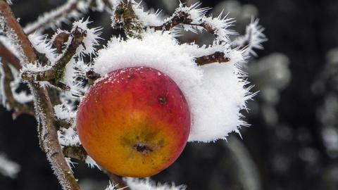 Momentaufnahme Apfel