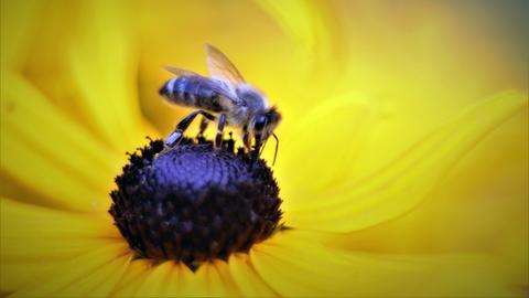 """""""Die Bienen sind immer noch fleißig. Kein Wunder - bei dem Sommerwetter und der Blütenpracht."""" Das Foto hat uns hessenschau.de-Nutzerin Veronika Runge aus Herborn."""