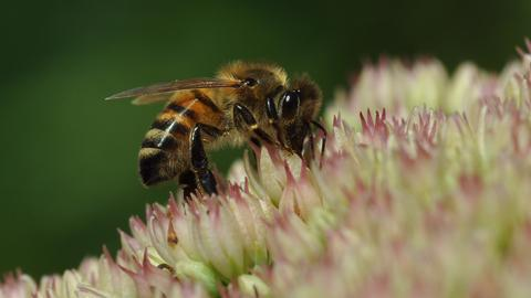 Momentaufnahme Biene Blume