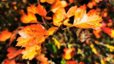 """""""Wie wunderschön sind die herbstlichen Farben aufeinander abgestimmt"""", schreibt hessenschau.de-Nutzerin Ilona Nickel aus Siegbach-Tringenstein (Lahn-Dill) zu ihrem Schnappschuss dieser bunten Blätter."""