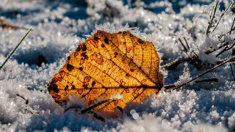 Das Blatt hat hessenschau.de-Nutzer Lothar Herla aus Ziegenhain bei frostigen minus zwölf Grad beim Morgenspaziergang abgelichtet. Haben Sie auch ein außergewöhnliches Bild aus Hessen? Dann schicken Sie uns Ihr Foto – wir freuen uns über Ihre Momentaufnahme.