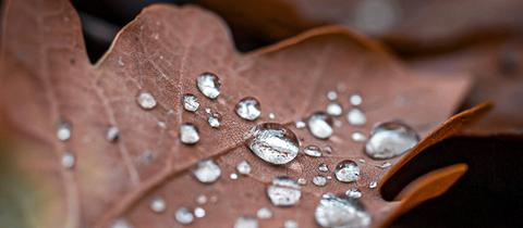 """""""Wenn man auf die kleinen Dinge achtet, hat auch ein regnerischer und stürmischer Tag seine schönen Seiten"""", schreibt uns hessenschau.de-Nutzerin Anne Krausgrill aus Butzbach Hoch-Weisel zu ihrem Foto."""