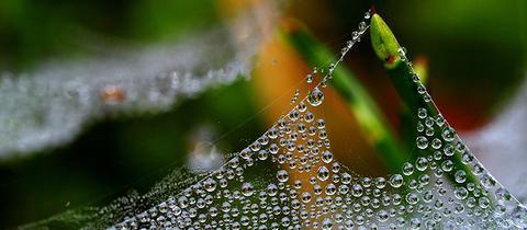 Ein Spinnennetz, mit unzähligen Tautropfen an einem Grashalm hat hessenschau.de-Nutzerin Brigitte Gundlach mit ihrer Kamera eingefangen. Haben Sie auch ein außergewöhnliches Bild aus Hessen? Dann schicken Sie uns Ihr Foto an foto@hessenschau.de.