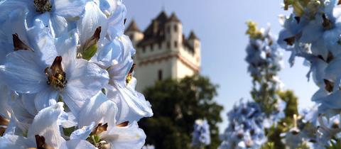 Das schöne Foto von der Burg in Eltville am Rhein hat uns Tanja Greitens geschickt. Haben Sie auch ein außergewöhnliches Bild aus Hessen? Dann schicken Sie uns Ihr Foto – wir freuen uns über Ihre Momentaufnahme.