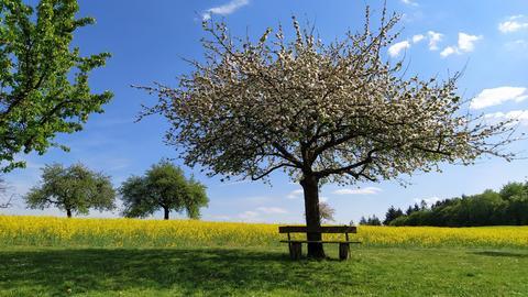 Wiese mit Baum - Frühling kommt