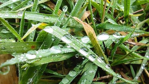 Gras mit Regentropfen