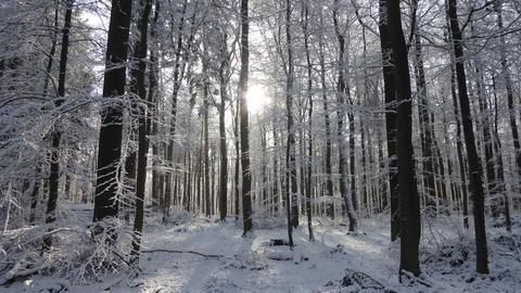 Lichtblick im Schnee