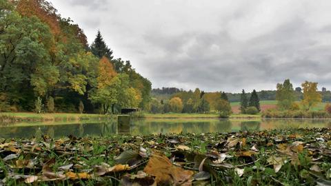 Teich bei Stammheim