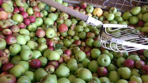 Momentaufnahme Hessenpark-Äpfel