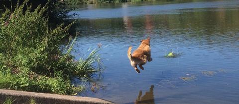 Ein Hund springt in die Fulda.